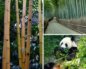 Junglewood Bamboo Stuffs
